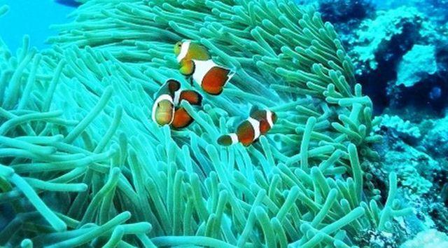 サンゴ と サンゴ礁 の違い!: ...